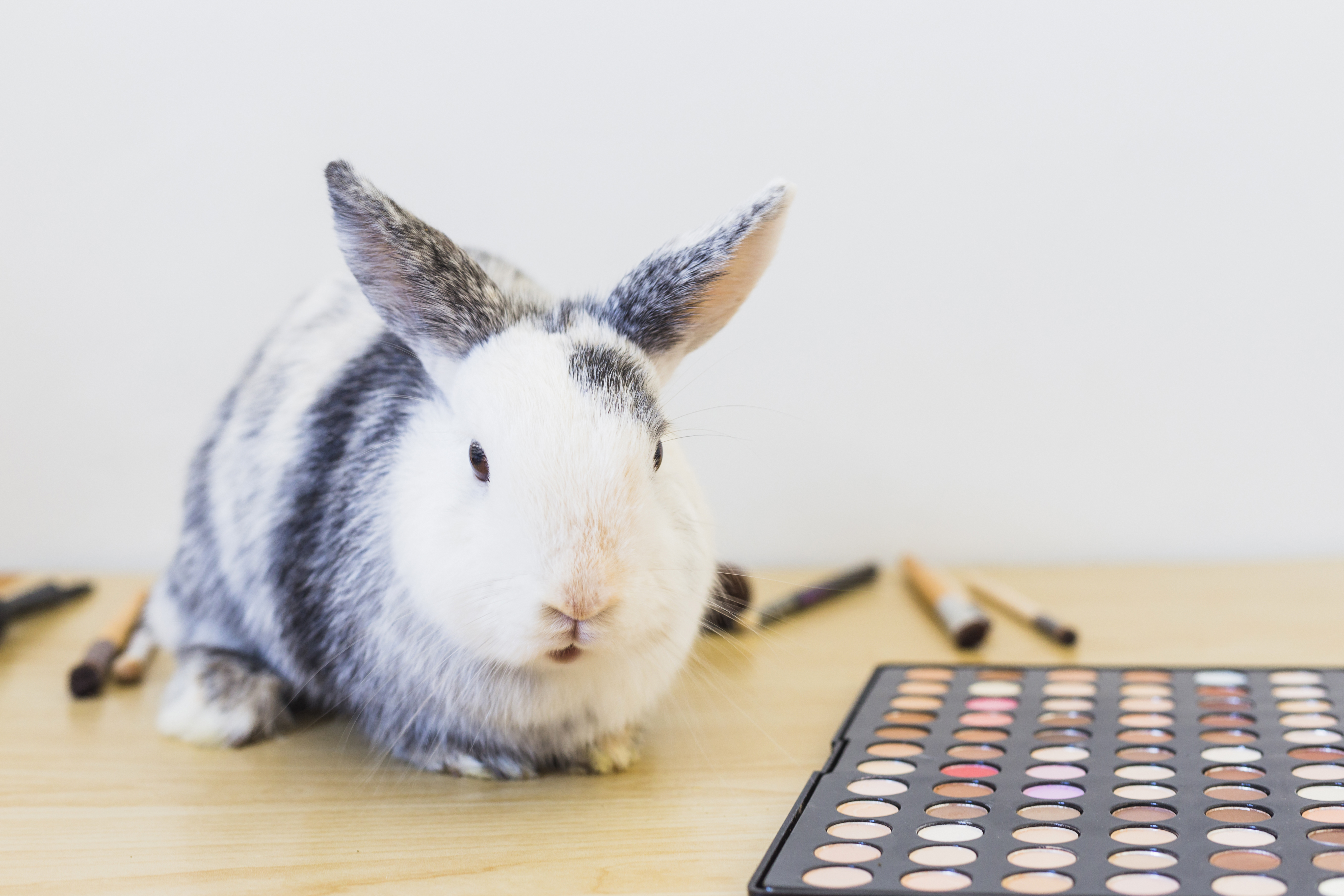 CSAR Subsidiary Regulations: China Deletes One Exceptional Circumstance for Animal Testing Exemption